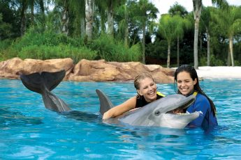 Discovery_Cove_orlando_theme_park_american_vacation_living-1-345x230 - disney